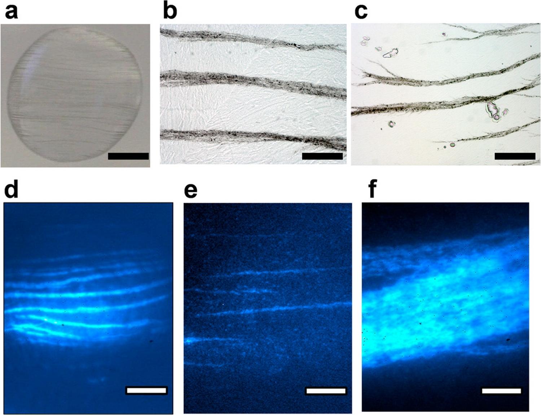 Teslaphorèse des nanotubes de carbone - 02